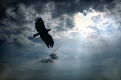 Eagle in the sky.